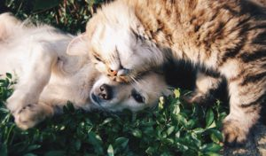 friends, cat and dog, cats and dogs